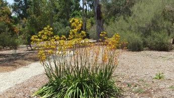 Huntington Australia Garden DSCF1619