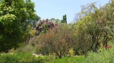 Huntington Australia Garden DSCF1623
