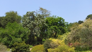Huntington Australia Garden DSCF1635