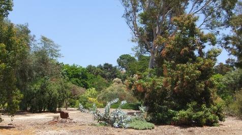 Huntington Australia Garden DSCF1654