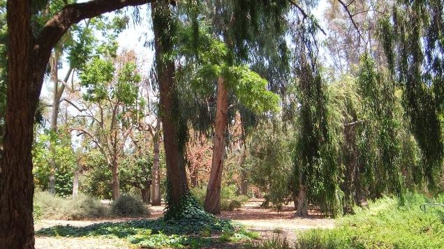 Huntington Australia Garden DSCF1685