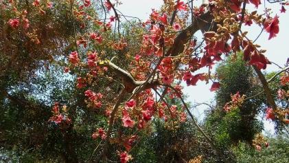 Huntington Australia Garden DSCF1707