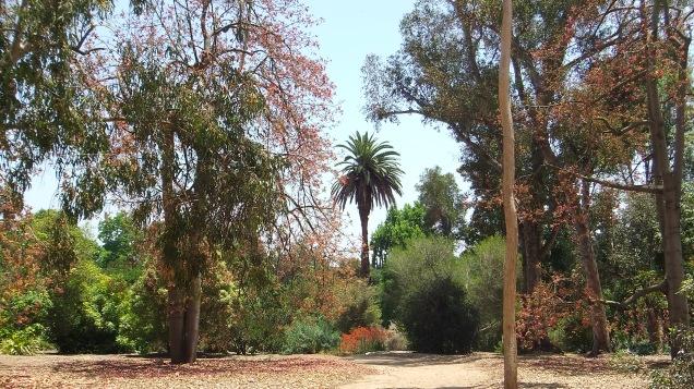 Huntington Australia Garden DSCF1718
