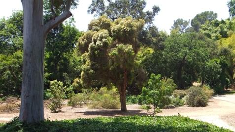 Huntington Australia Garden DSCF1747