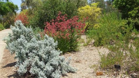 Huntington Australia Garden DSCF1829