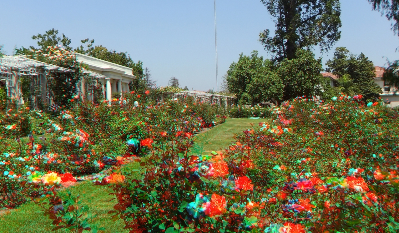 Huntington Rose Garden 3DA 1080p DSCF0307