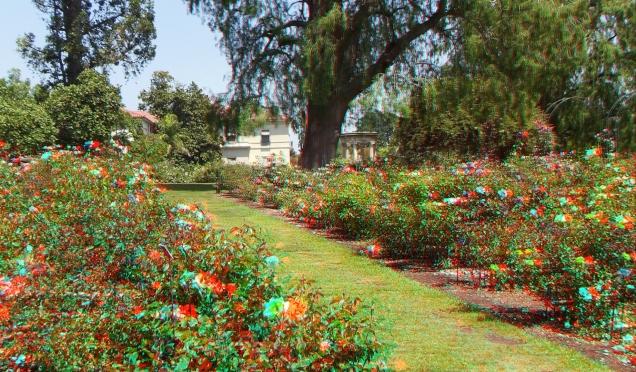 Huntington Rose Garden 3DA 1080p DSCF0308
