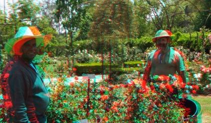 Huntington Rose Garden 3DA 1080p DSCF0310