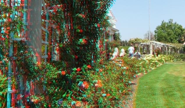 Huntington Rose Garden 3DA 1080p DSCF0330