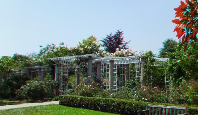 Huntington Rose Garden 3DA 1080p DSCF0963