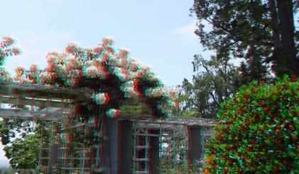 Huntington Rose Garden 3DA 1080p DSCF1045