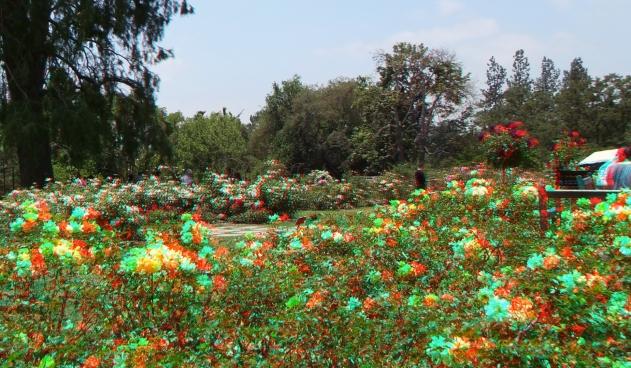 Huntington Rose Garden 3DA 1080p DSCF1054