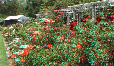 Huntington Rose Garden 3DA 1080p DSCF1064