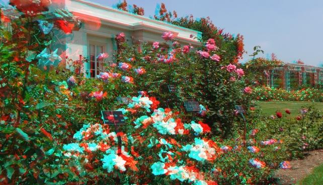 Huntington Rose Garden 3DA 1080p DSCF1068