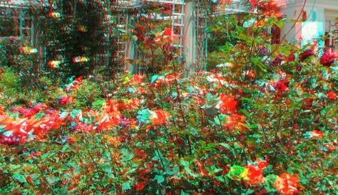 Huntington Rose Garden 3DA 1080p DSCF1069