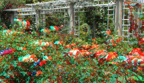 Huntington Rose Garden 3DA 1080p DSCF1074