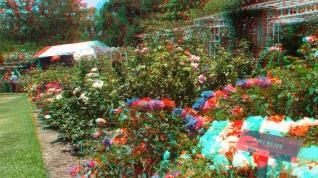Huntington Rose Garden 3DA 1080p DSCF1078