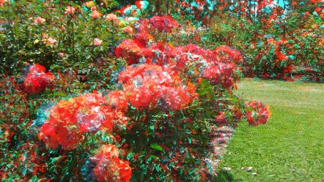 Huntington Rose Garden 3DA 1080p DSCF1083