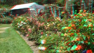 Huntington Rose Garden 3DA 1080p DSCF1092