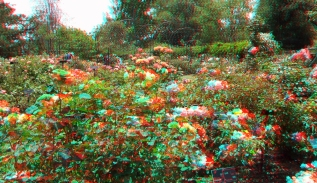 Huntington Rose Garden 3DA 1080p DSCF1102