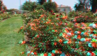 Huntington Rose Garden 3DA 1080p DSCF1108