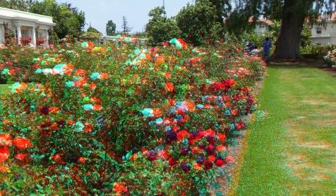 Huntington Rose Garden 3DA 1080p DSCF1120