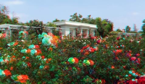 Huntington Rose Garden 3DA 1080p DSCF1121