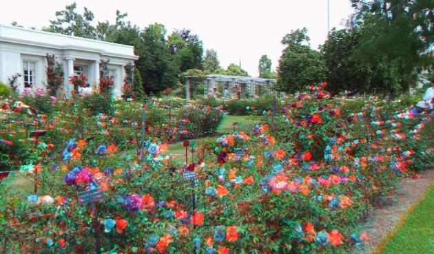 Huntington Rose Garden 3DA 1080p DSCF1126
