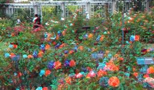 Huntington Rose Garden 3DA 1080p DSCF1127