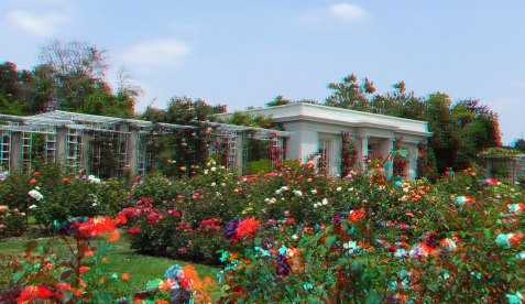 Huntington Rose Garden 3DA 1080p DSCF1132
