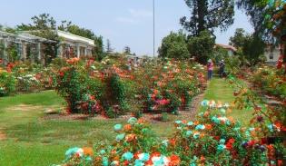 Huntington Rose Garden 3DA 1080p DSCF1152