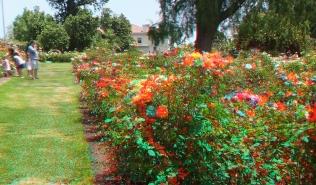 Huntington Rose Garden 3DA 1080p DSCF1156