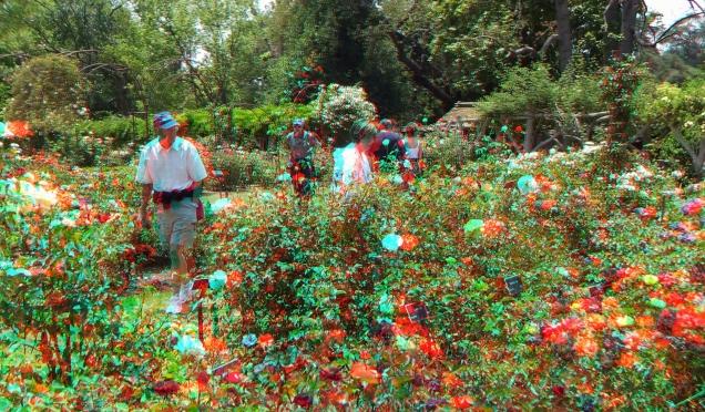 Huntington Rose Garden 3DA 1080p DSCF1165
