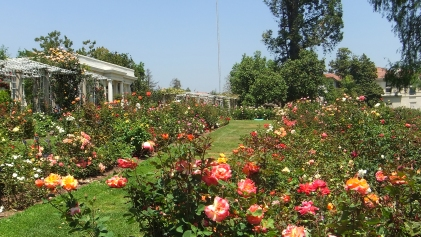 Huntington Rose Garden DSCF0307