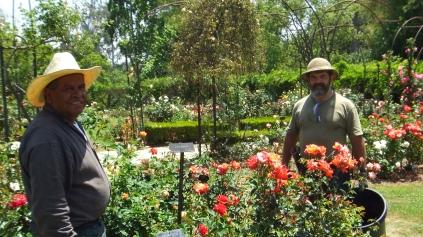 Huntington Rose Garden DSCF0310