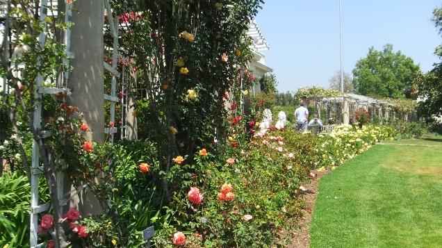 Huntington Rose Garden DSCF0330