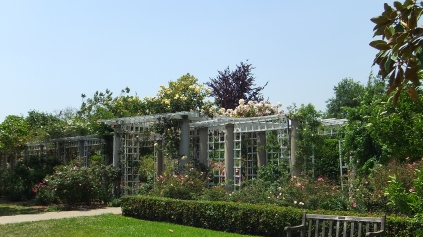 Huntington Rose Garden DSCF0963