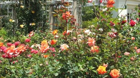 Huntington Rose Garden DSCF1069