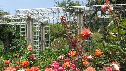 Huntington Rose Garden DSCF1071