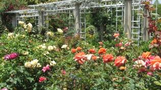 Huntington Rose Garden DSCF1074
