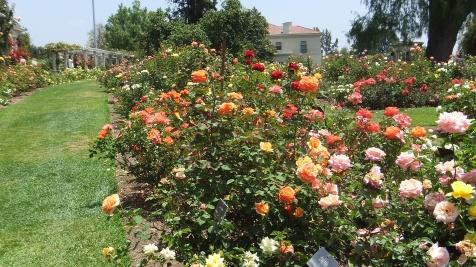 Huntington Rose Garden DSCF1108