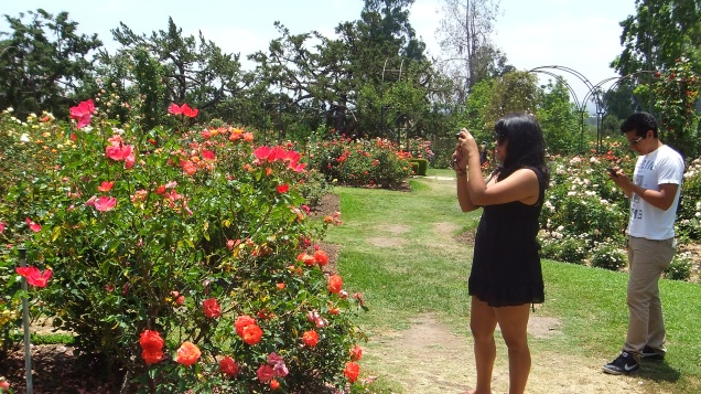 Huntington Rose Garden DSCF1116