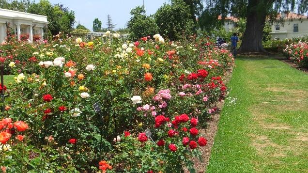 Huntington Rose Garden DSCF1120