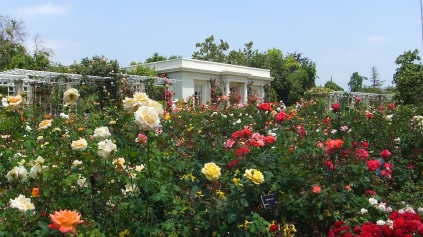 Huntington Rose Garden DSCF1121