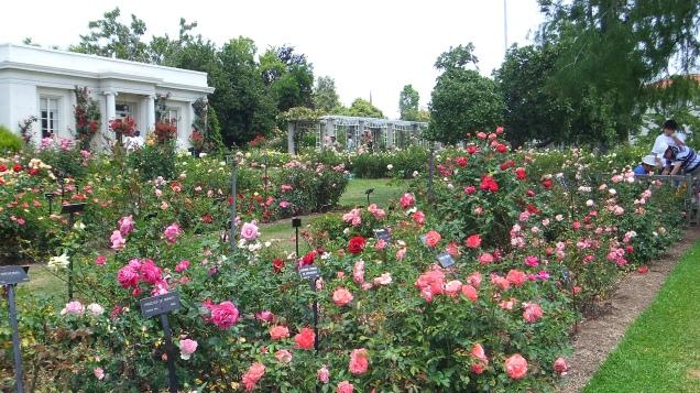 Huntington Rose Garden DSCF1126