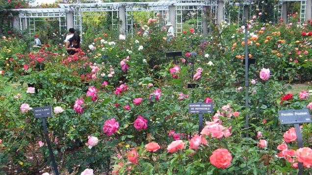 Huntington Rose Garden DSCF1127