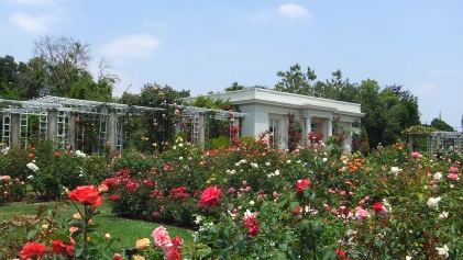 Huntington Rose Garden DSCF1132