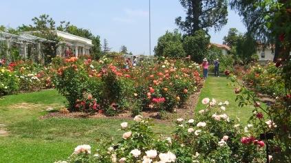 Huntington Rose Garden DSCF1152