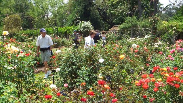 Huntington Rose Garden DSCF1165
