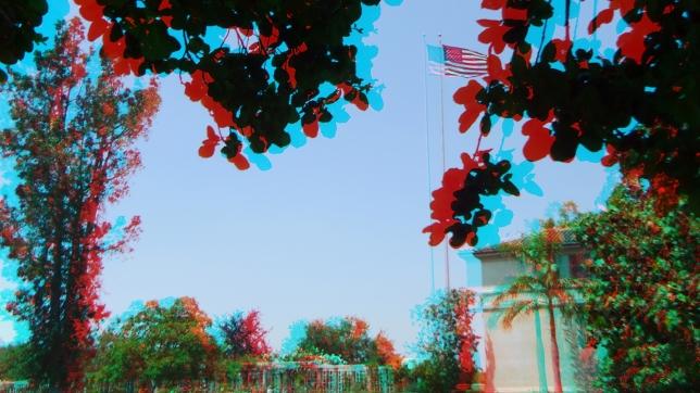 Huntington Subtropical Garden 3DA 1080p DSCF0258